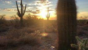 Coucher du soleil de désert de Scottsdale Arizona banque de vidéos