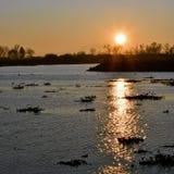 Coucher du soleil de delta Image stock