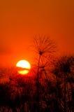 Coucher du soleil de delta au-dessus de papyrus photos libres de droits