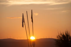 Coucher du soleil de drapeau Photo libre de droits