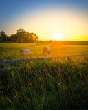 Coucher du soleil de ferme d'Ontario Photographie stock