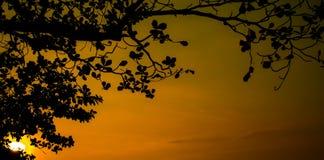 Coucher du soleil de feuille Photos libres de droits