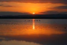 Coucher du soleil de flamants dans le lac de sel Photographie stock libre de droits