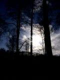 Coucher du soleil de forêt Images libres de droits