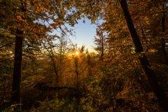 Coucher du soleil de forêt d'Atumn Images libres de droits