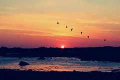 Coucher du soleil de Galway avec des oiseaux Image libre de droits