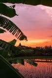 Coucher du soleil de gisement de riz, Asie Photographie stock