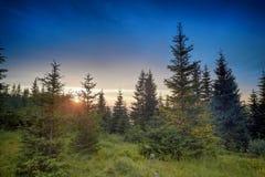Coucher du soleil de Hdr dans les bois Images stock