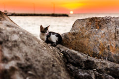 Coucher du soleil de Kitty On The Rocks In Photographie stock