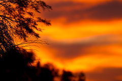 Coucher du soleil de l'Afrique Images libres de droits
