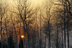 Coucher du soleil de l'hiver Photo stock