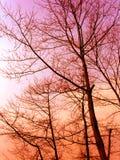 Coucher du soleil de l'hiver des bois Images libres de droits