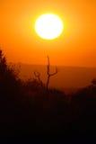 coucher du soleil de la savane de l'Afrique Photos stock