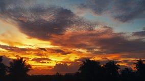 Coucher du soleil de laps de temps, lever de soleil dans la jungle, silhouettes de paume, cirrus lumineux clips vidéos