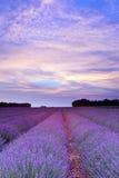 Coucher du soleil de lavande de la Provence Images libres de droits