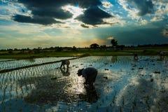 Coucher du soleil de lever de soleil de paysage de rizière beau Photographie stock