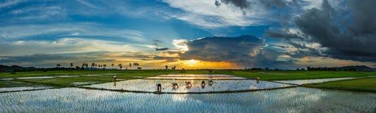 Coucher du soleil de lever de soleil de paysage de rizière beau photos stock