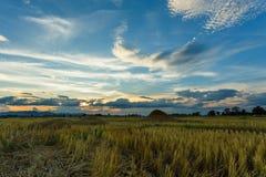 Coucher du soleil de lever de soleil de paysage de rizière beau photos libres de droits