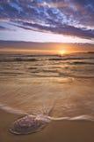 Coucher du soleil de méduses Photo libre de droits