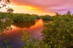 Coucher du soleil de Mangroove en Riviera Maya Mexico photos stock