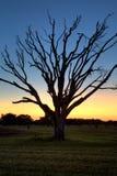 Coucher du soleil de marais de la Floride Image stock