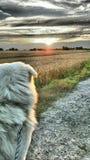 Coucher du soleil de Maremma Photographie stock