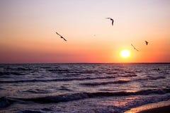 Coucher du soleil de mer, belle plage de coucher du soleil, mouettes volantes au-dessus de la mer en soleil de coucher du soleil Images libres de droits
