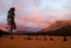 Coucher du soleil de montagne. Grand arbre Photographie stock libre de droits