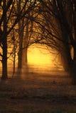 Coucher du soleil de noix de pécan image libre de droits