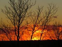 Coucher du soleil de novembre par les arbres images libres de droits