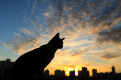 Coucher du soleil de observation de chat Photos libres de droits