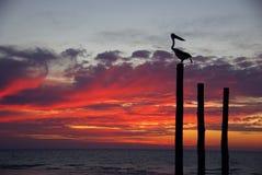 coucher du soleil de pélican Photos stock