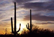 Coucher du soleil de parc national de Saguaro Images libres de droits