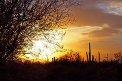 Coucher du soleil de parc national de Saguaro Photographie stock