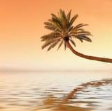 Coucher du soleil de paume photo libre de droits
