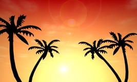 Coucher du soleil de paume Photos stock