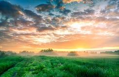 Coucher du soleil de paysage d'été sur le champ Photo stock