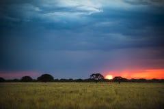 Coucher du soleil de paysage de Pampas Photographie stock