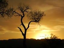Coucher du soleil de peuplier Image libre de droits