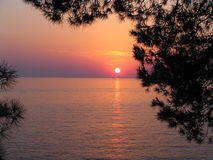 Coucher du soleil de pin Image stock
