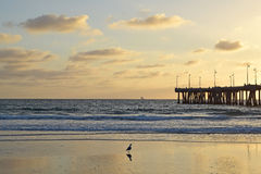 Coucher du soleil de plage de Venise Images libres de droits