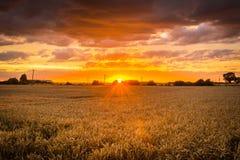 Coucher du soleil de récolte Photographie stock
