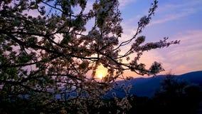 Coucher du soleil de ressort Image stock