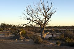Coucher du soleil de ressort au-dessus de magie de lac, Hyden, WA, Australie images stock