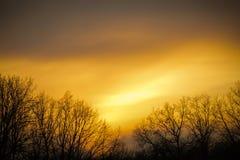 Coucher du soleil de ressort dans la for?t photo stock