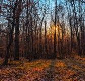 Coucher du soleil de ressort dans la for?t image stock