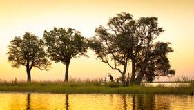 Coucher du soleil de rivière de Chobe photographie stock libre de droits