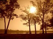 Coucher du soleil de sépia en stationnement Image libre de droits