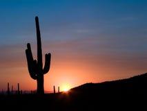 Coucher du soleil de Saguaro Photos stock