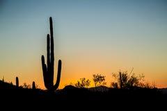 Coucher du soleil de Saguaro Photographie stock libre de droits